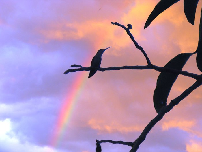 rainbow_hummingbird_by_luckygirlloveart-d3j6w55[1]